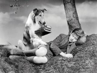 McDowall_Roddy_Lassie_Come_Home_01
